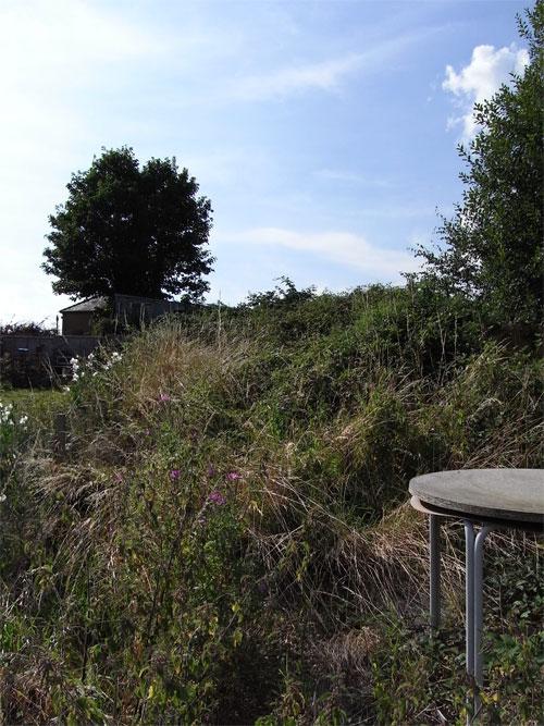 Heavily Overgrown Garden