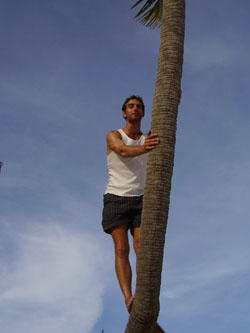Palm Tree Climbing